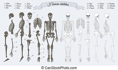 Human Skeleton. White and Black. Names of Bones - Human...