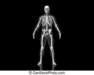 Human skeleton with transparent body 3d render