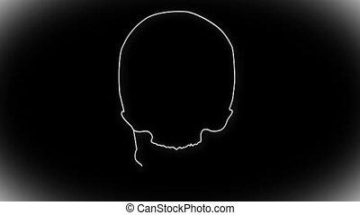 Human Skull 02 front - Human Skull structure animation...