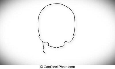 Human Skull 03 front - Human Skull structure animation...