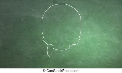 Human Skull 09 front - Human Skull structure animation...
