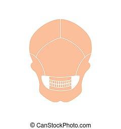 Human skull anatomy.