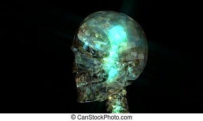 Human Skull Animation - Animation of a Human Skull