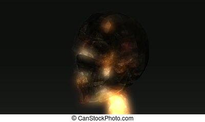 Human Skull Animation