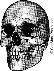 Human Skull Drawing - Skull drawing in a retro vintage wood...