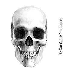 Human Skull - Front View- Pencil Drawing Style - this is a 3D render, the pencil effect was achieved by using special shaders in the rendering process. Amazing detail.