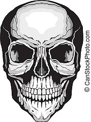Illustration of a frontal view of a stylized human skull. One color vector format is easily edited or separated for print and screen print.