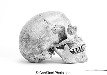 human skull in black and white color, isolated on white background