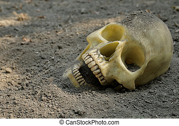 Human skull in dirt - Human skull half buried in the earth