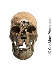 Human skull isolated.
