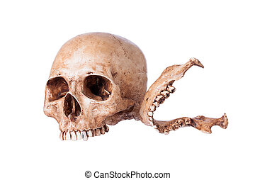 Human skull, Isolated on a white background.