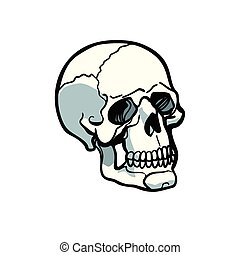human skull isolated on white background