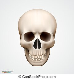 Human skull isolated on white