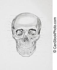 human skull. medical illustration
