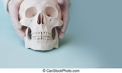Human skull on clear blue background. Hands doctor or Intern in latex gloves put the skull on the surface
