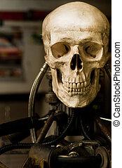 Human skull on robot body close up