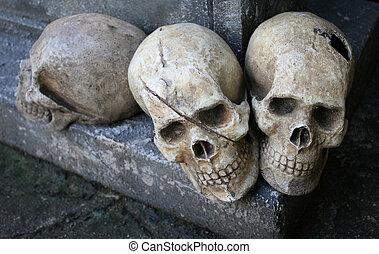 human skull on the rock