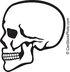 human skull profile (skull profile, side skull)