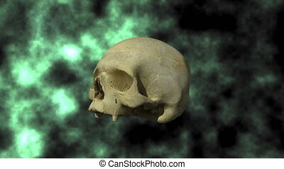 Human Skull Rotates 30P - 3D scan of actual human skull,...