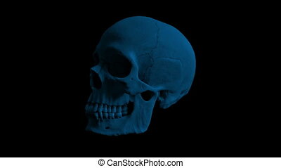 Human Skull Rotating In The Dark Loop