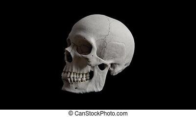Human Skull Rotating Loop