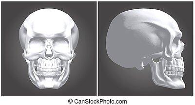 Human Skull Vector 06.eps