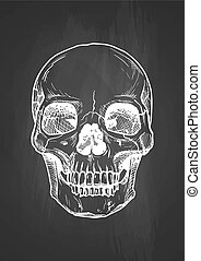 human skull with a lower jaw - Vector black and white...