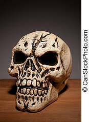 Human Skull With Copyspace