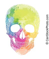Human skull with rainbow watercolor splashes on a white background. Vector element for your design