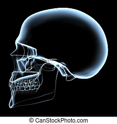 Human Skull - X-Ray Side View - rendered bluish x-ray image...