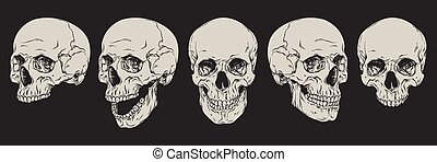 Human skulls set isolated