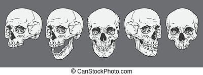 Human skulls set vector illustration