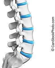 3d rendered illustration - human spine
