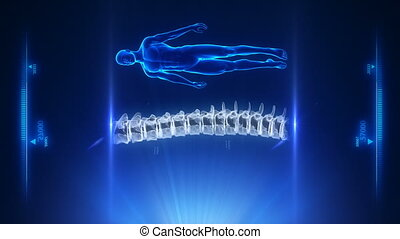 Human spine blue projection in loop