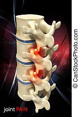 human spine - Digital illustration of human spine in colour...