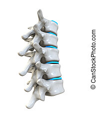 human spine - 3d rendered anatomy illustration from a part...