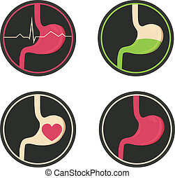 Human stomach illustration