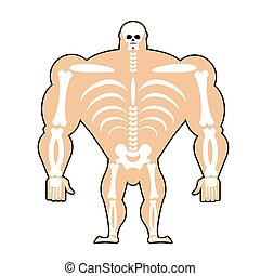 human structure. Skeleton men. construction of athlete. Bones and skull. Athlete internal organs. Human bone system. Anatomy bodybuilder.
