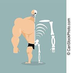 human structure. Skeleton men. construction of athlete. Bones and skull. Athlete internal organs. Human bone system. Anatomy bodybuilder.