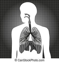 Human system respiratory illustration