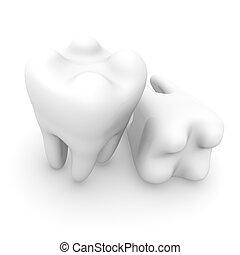 Human Teeth - White teeth on a white background