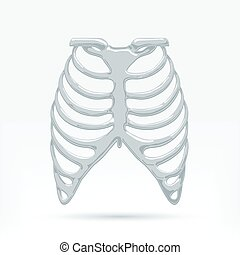 Human Thorax - vector illustration of a human thorax