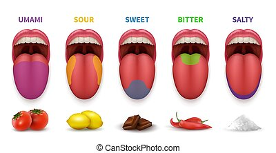 Human tongue basic taste areas. Smack map in mouth sweet, salty, sour, bitter and umami vector diagram isolated on white background. Illustration of localization sense sugary zone