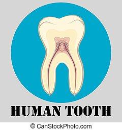 Human tooth emblem
