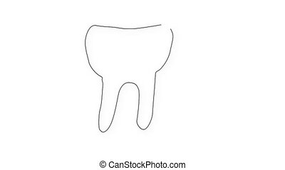 Human Tooth Structure 02