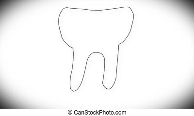 Human Tooth Structure 03