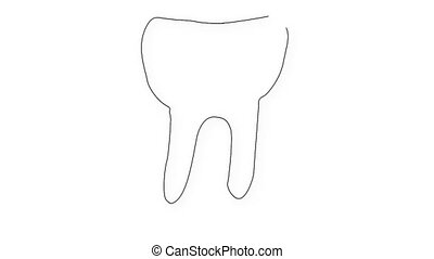 Human Tooth Structure 04