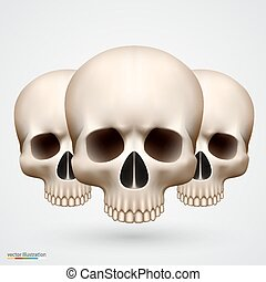 Human tree skulls isolated on white