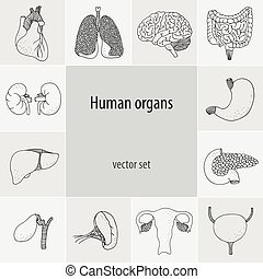 Human vector organs