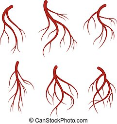Human veins, red blood vessels realistic vector medical...